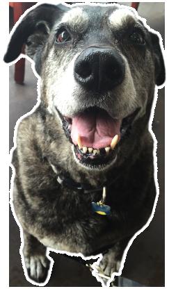 Home community bark dog wash and dog groomer dog dog solutioingenieria Gallery