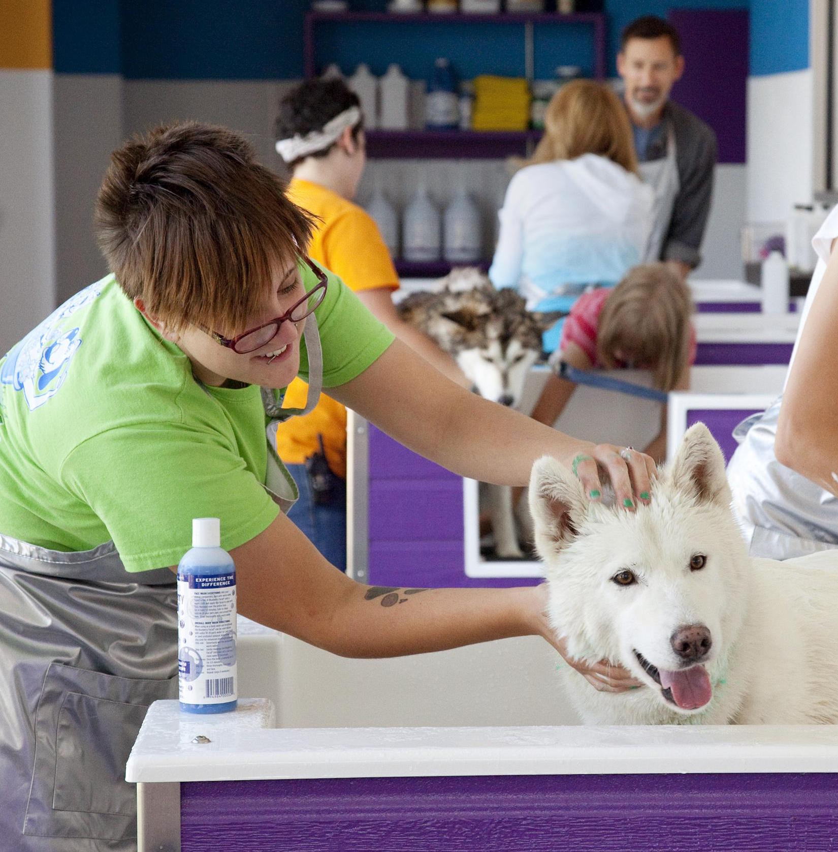 Fullbark community bark dog wash and dog groomer service campaign image solutioingenieria Image collections
