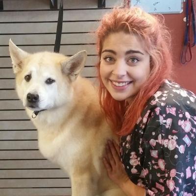 Home · Community Bark - Dog Wash and Dog Groomer